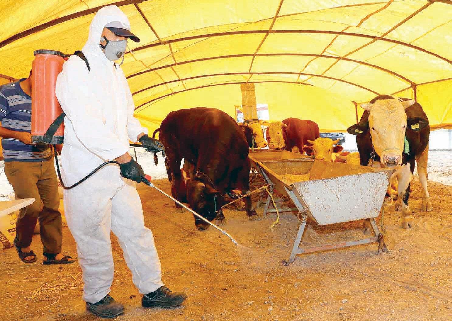 Büyükşehir Belediyesi, kurban kesim ve satış alanlarında veterinerlik hizmeti de verecek. Ayrıca tüm hayvan satış ve kesim alanlarında koronavirüs tedbirleri kapsamında ilaçlamalar yapıldı.