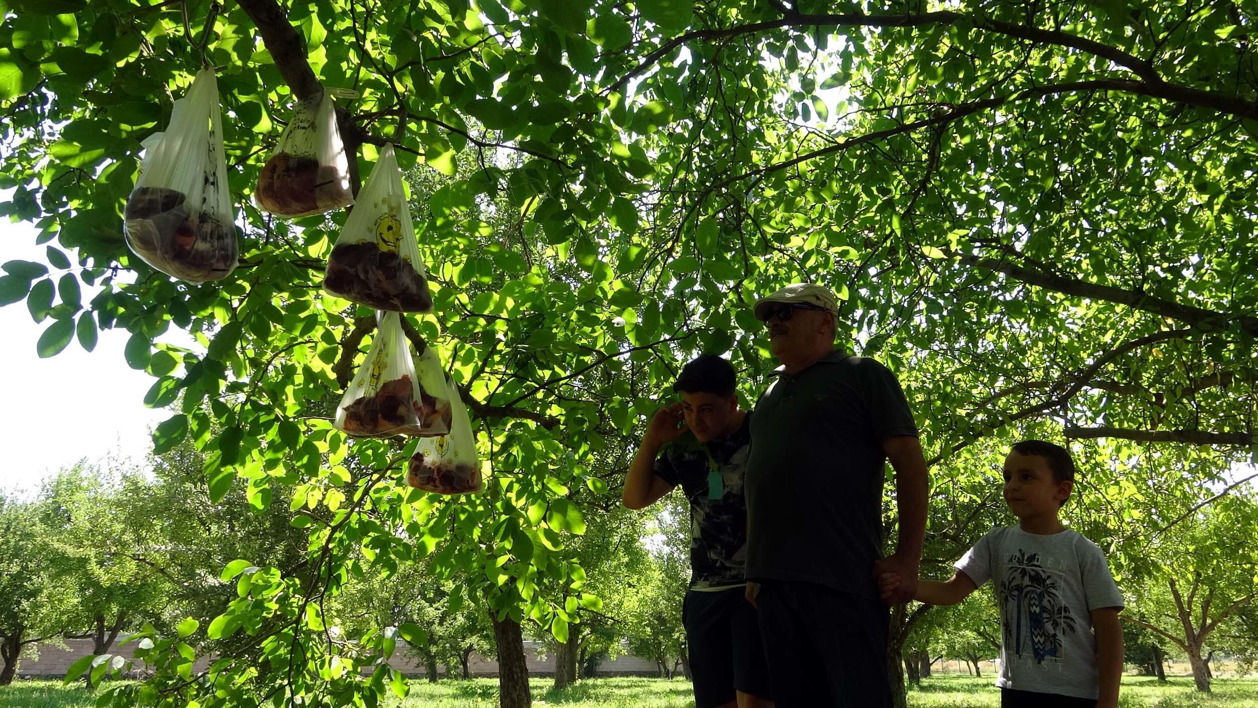 Pandemide, ihtiyaç sahipleri için kurban etlerini bahçesindeki ağaca astı