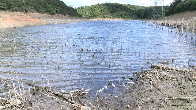 Alibeyköy Barajı'nın içler acısı hali kamerada: Ölü balık ve çöplerden geçilmiyor
