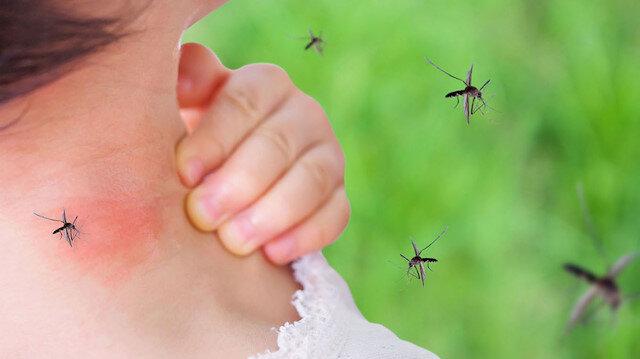 Yara bere içinde bırakan sivrisinekler kuşlardan virüs taşıyor