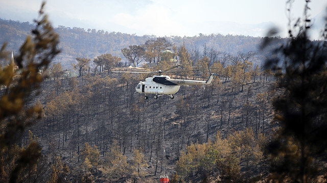 Yangına hassas alanlara 'ateşe dayanıklı' türler dikiliyor