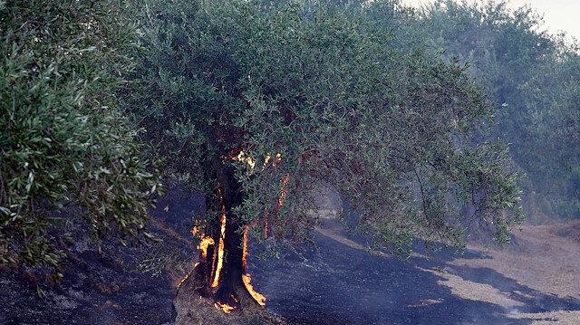 Bütün dünya orman yangınlarıyla boğuşuyor