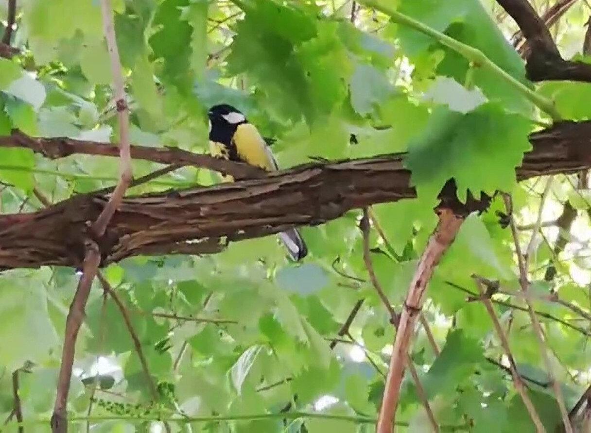 Kuş daha sonra gölgelik alana bırakıldı.