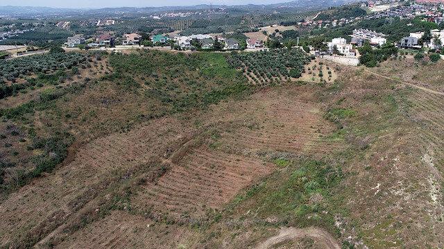 Yanan 36 hektarlık alan yeniden ağaçlandırıldı: Bölge havadan görüntülendi