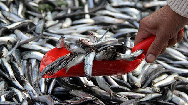 Balık fiyatları vatandaşı henüz mutlu etmedi: Palamut 25-30 lira, çupra 30 lira, hamsi 40 lira
