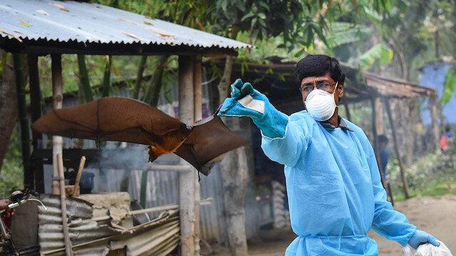 Hindistan'da 'Nipah' alarmı: 12 yaşındaki çocuk 'yarasa kaynaklı virüs' yüzünden öldü