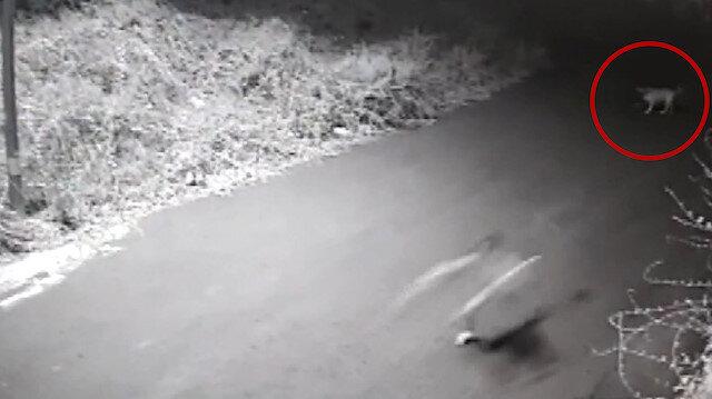 Sarıyer'de sokak köpeğinin kovalamasıyla yuvarlanan çocuğun kolu kırıldı