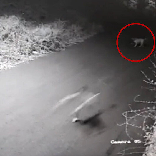 Sarıyerde sokak köpeğinin kovalamasıyla yuvarlanan çocuğun kolu kırıldı