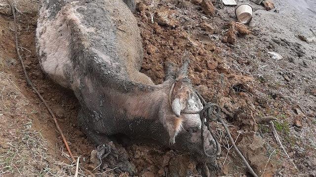 Derede bataklığa saplanan büyükbaş hayvan itfaiye tarafından kurtarıldı