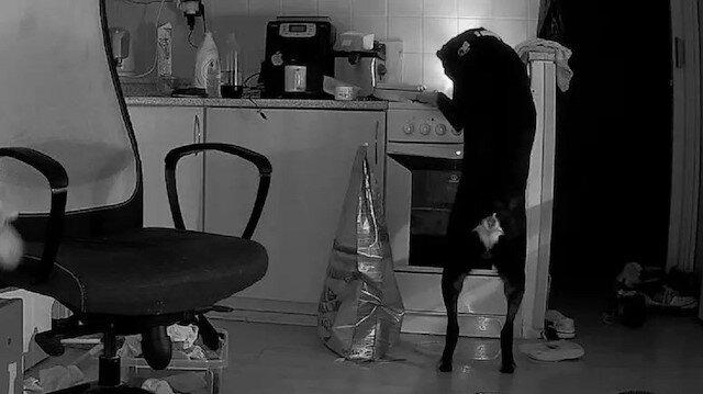 Çekya'da yemek arayan köpek mutfağı ateşe verdi