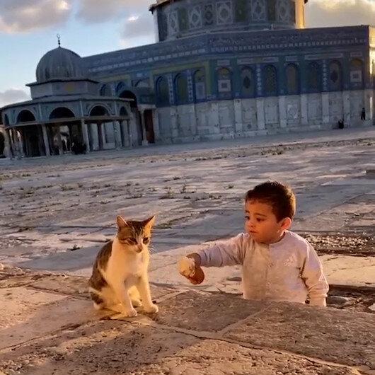 Mescid-i Aksada yemeğini kediyle paylaşan sevimli çocuk