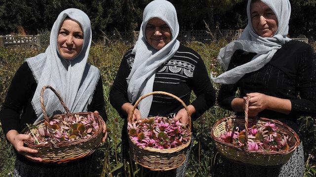 Adını bile duymadıkları bitkiden 25 bin lira kazandılar: Yeni duyduk ama iyi talep görüyor