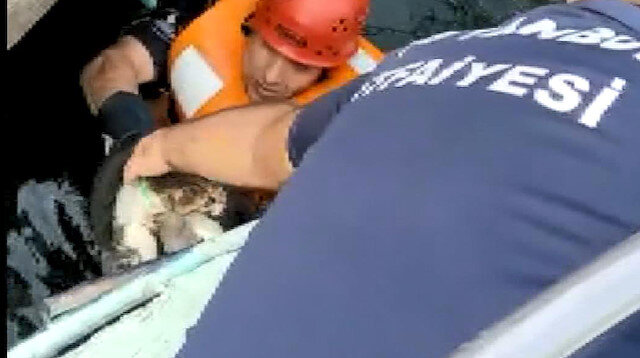 Avcılar'da itfaiye denize düşen kedi için seferber oldu