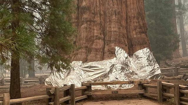 Kaliforniya'da yangın: Tarihi ağaçlara alüminyum folyolu önlem