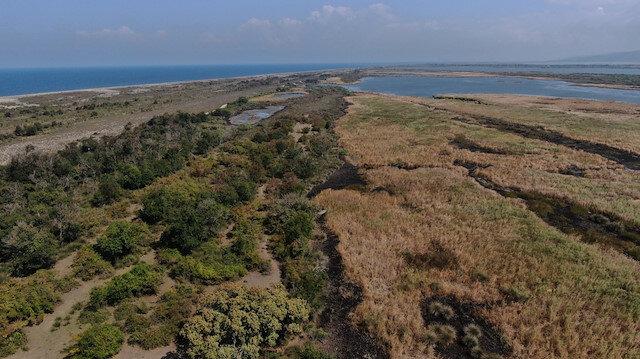 Deniz ve ormanın kucaklaştığı Karacabey Longoz Ormanları görenleri mest ediyor