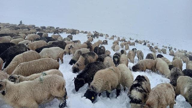 Kar yağışı en çok onları etkiledi