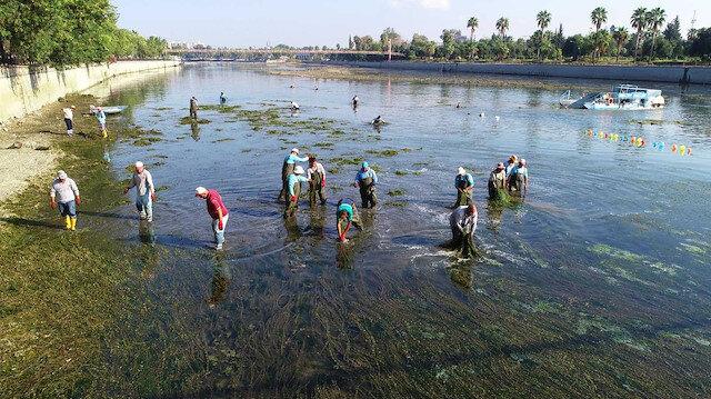 Seyhan Nehri'ni yosunlar istila etti
