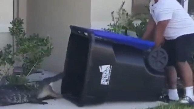 ABD'de timsahı çöp kovasıyla yakalayan adam yürekleri ağza getirdi