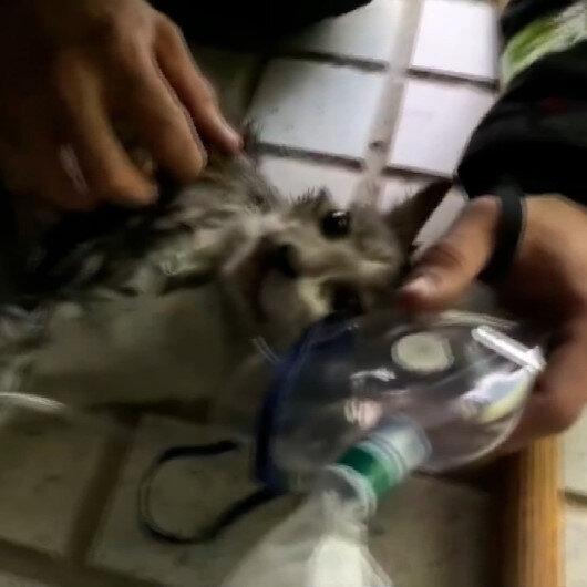 Yangından kurtarılan kedi oksijen maskesiyle hayata döndürüldü