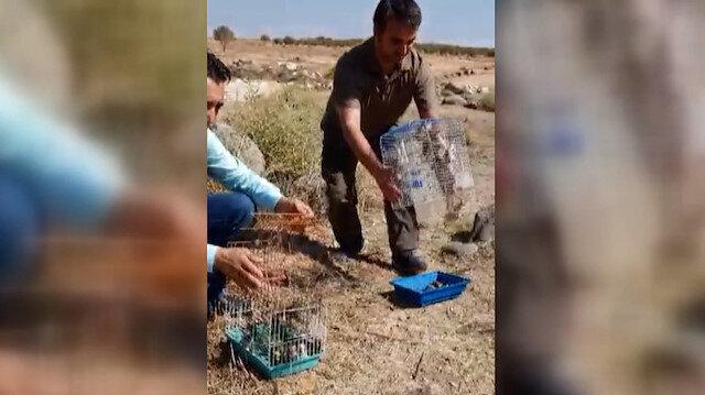 Suriye'ye götürülmek istenen 222 saka kuşu doğaya salındı