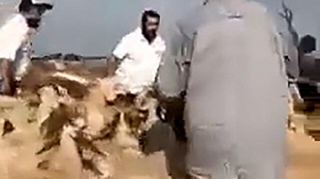 İşgalci Yahudiler bu kez Filistinlilere ait koyun sürüsüne saldırdı