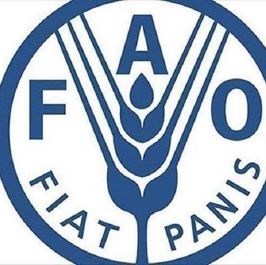 """""""فاو"""": أسعار الغذاء العالمية تقفز 32.8 بالمئة في سبتمبر"""