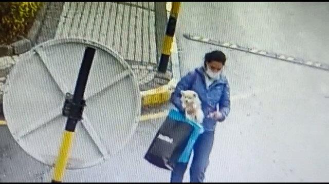 Sarıyer'de önce sevdi sonra alıp gitti: Köpeği çalan kadın kameradan bulundu
