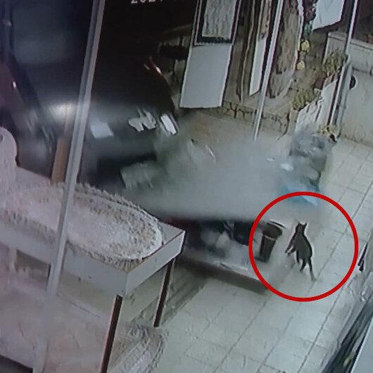 Ankarada kontrolden çıkan araç dükkana girdi: Kedi ezilmekten son anda kurtuldu