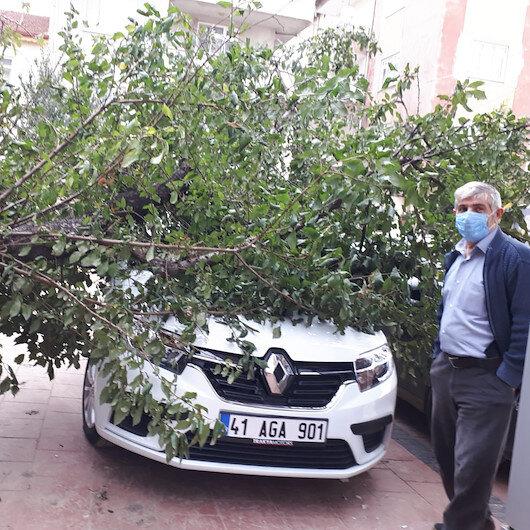 Şiddetli rüzgar ağaçları devirdi: Otomobiller zarar gördü