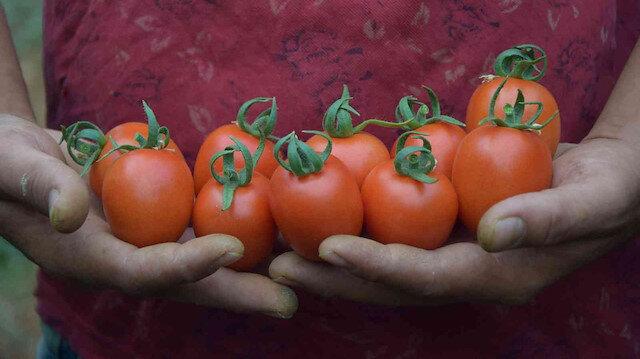 Kokteyl domates üreticide 13 lira markette 23 lira