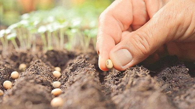 Afganistan'a 100 ton yerli tohum: Dört farklı tohum çeşidi gönderildi