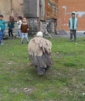 Yorulan akbaba Arnavutköy'e indi