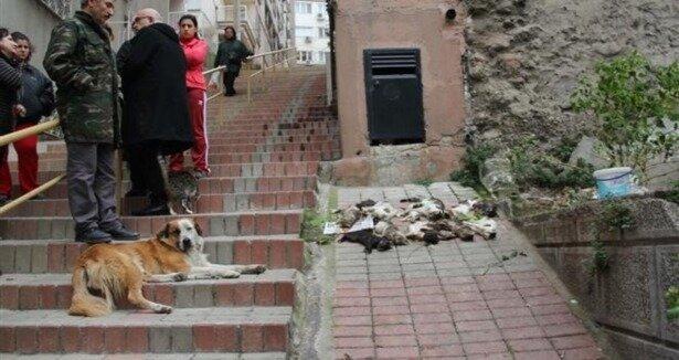 İzmir'de 12 kediyi zehirlediler